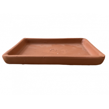 Plato Bonsai rectangular